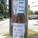 Parrot Lost