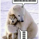 Polar bear and wolf