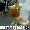 Trust Me…
