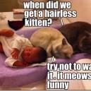 When did we get a hairless kitten?
