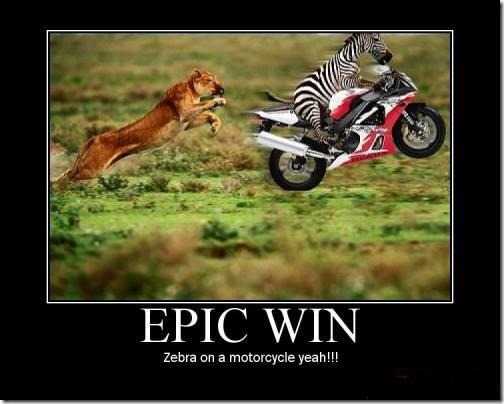Zebra on a Motorcycle Epic Win zebra on a motorcycle epic win!