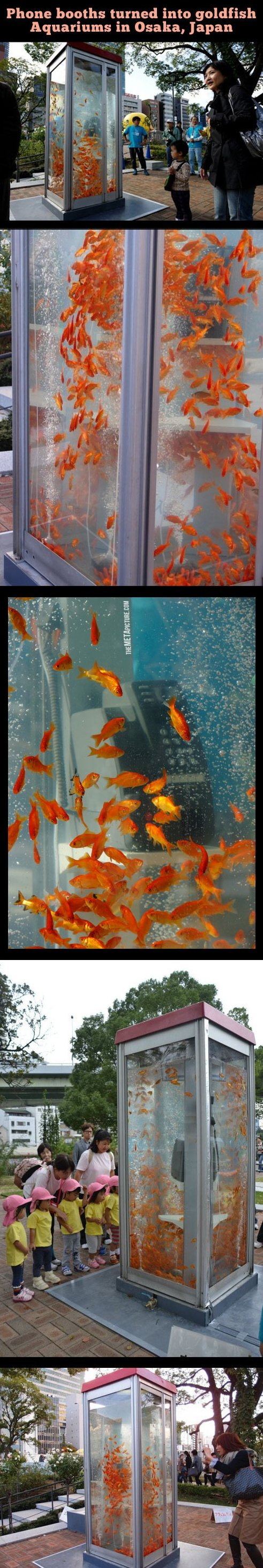 Awesome Aquarium phone booths