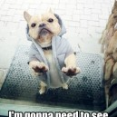 Bouncer Dog