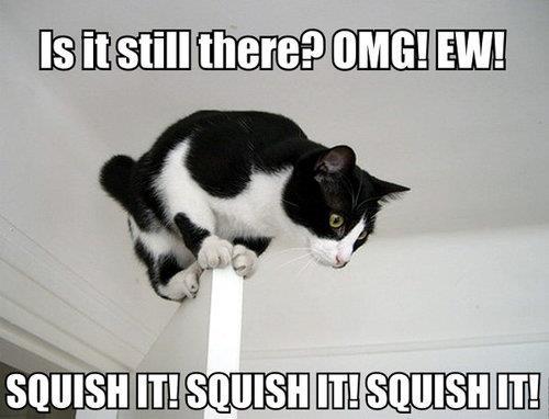 Brave Cat…