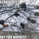 Cat lady tree