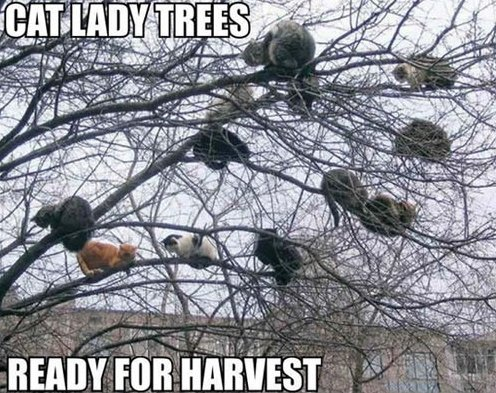 Cat lady tree