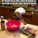 Chef Dog