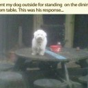 Funny Pictures Dogs
