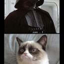 Grumpy Cat vs. The Dark Side