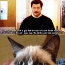 Grumpy cat master