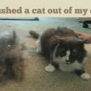 Hairy cat