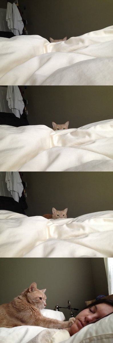 How cat people wake up