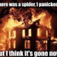 How to deal with spiders