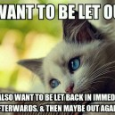 Kitten logic