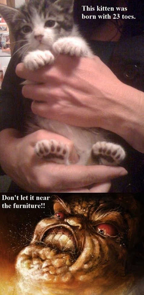 Kitten with 23 toes
