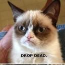 LOL – Grumpy Game