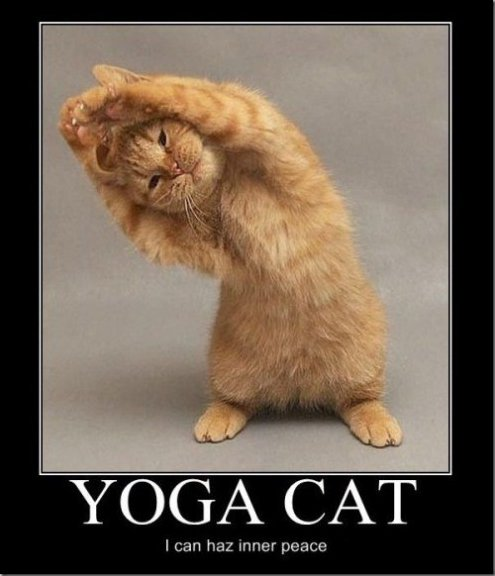 LOL – Yoga Cat