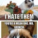MEME – Best Of Grumpy Cat