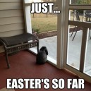 MEME – Contemplative Bunny