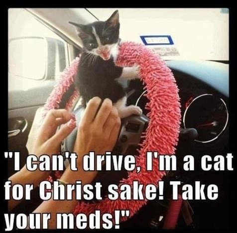 MEME – Driving cat