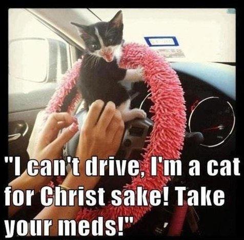 MEME – Driving cat