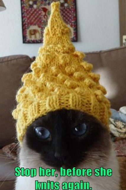 MEME – Funny Cat