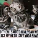 MEME – Mean Kitties