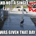Not a single…
