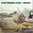 Photbomb Level: WHALE