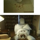 Scaring Hotel Maids