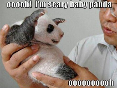 Scary baby panda