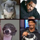 The real Ice Cube and Snoop Dogg