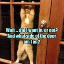 Typical Cat Logic