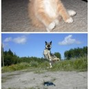 Animals doing silly things