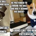 Attorney Dog