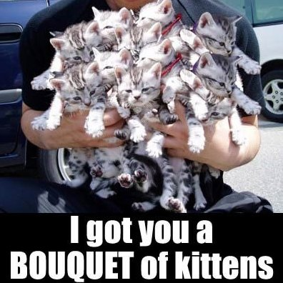 Bouquet of kittens