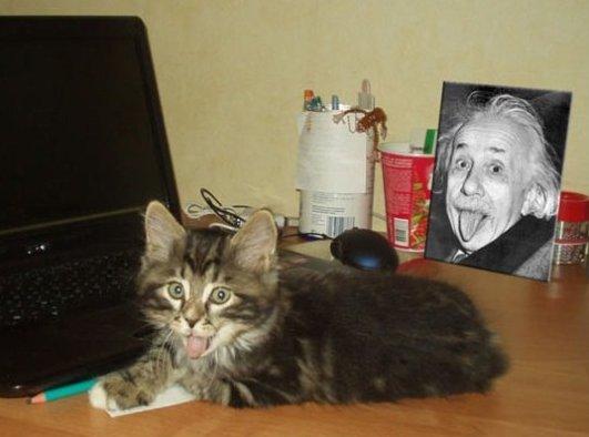 Catbert Einstein