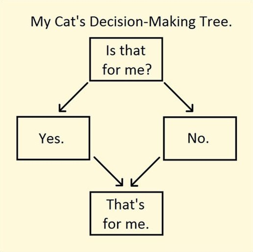 Cats Decision Making