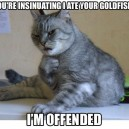 Deeply offended cat