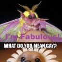 Fabulous animals