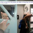 Funny Pictures – Awesome cat