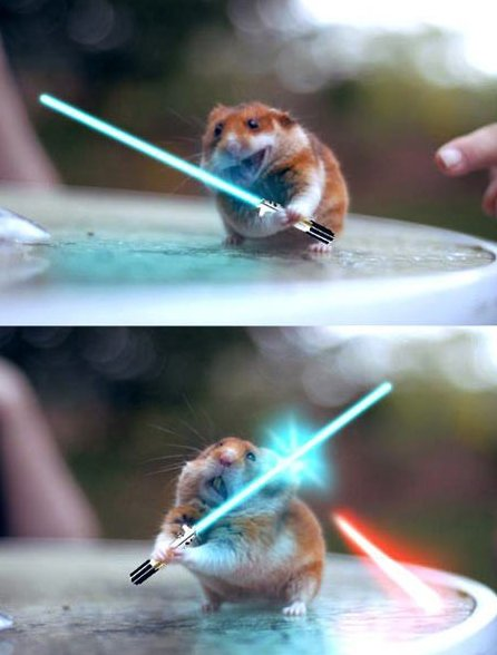 Funny Pictures – Jedi Hamster
