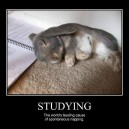 Funny Pictures – Napping