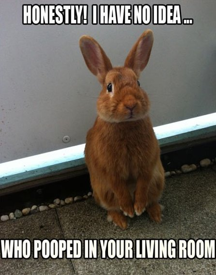 Funny Rabbit – No idea…