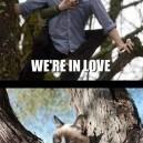 Grumpy cat vs. Twilight