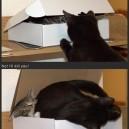 I has box