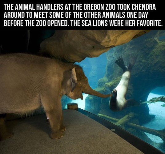 Just an elephant visiting a sea lion