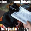 Leisure Interruption
