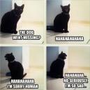 MEME – Sad cat