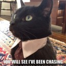 MEME – Unemployed business cat